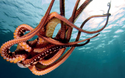 Systemic solutions for sustainable transitions?  Learning from the case of Mayan Octopus fishing industry in Mexico